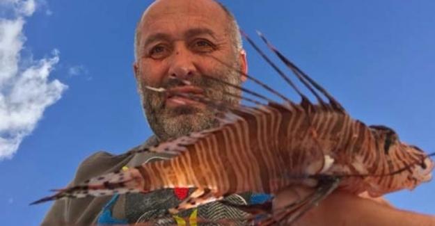 Bodrum ve Gökova Körfezinde hızla yayılan zehirli balıklar !