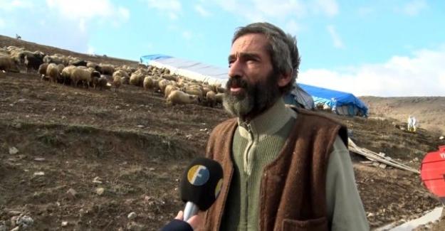 10 günde 600 koyunu ölen besici Cumhurbaşkanı Erdoğan'dan yardım istedi