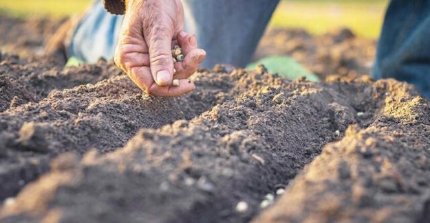 Yerli tohum seferberliği başlıyor