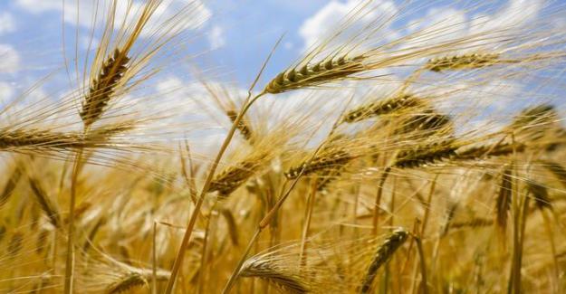Rapor: Koronavirüs gıda fiyatlarını düşürecek