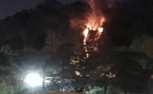 Şimdi de İstanbul Emirgan korusunda yangın!