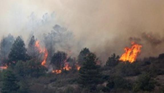 Bolu'nun Dörtdivan ilçesi ormanlık bölgesinde yangın!..