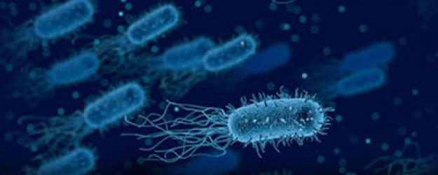 Dünyanın koronadan sonra yeni belası ortaya çıktı: Ölümcül bakteri hızla yayılıyor!