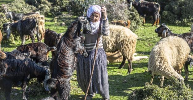 'Fatma teyze' Amanos Dağları eteklerinde yarım asırdır çobanlık yapıyor