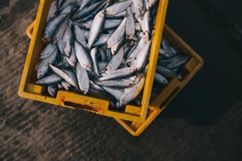 Terkos Gölü'nde, yasadışı balıkçılık denetiminde, 2 ton balık yakalandı