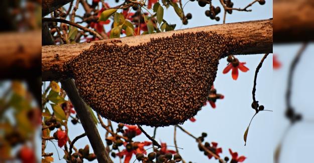 Arıların hayranlık uyandıran dünyası..