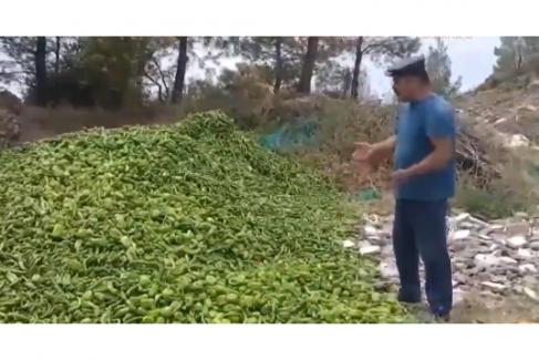 Çiftçi ürünlerini çöpe döküyor!..