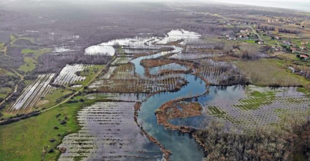 Dünyada ikinci, Türkiye'de ise tek parça halindeki en büyük longoz: Sakarya Acarlar Longozu