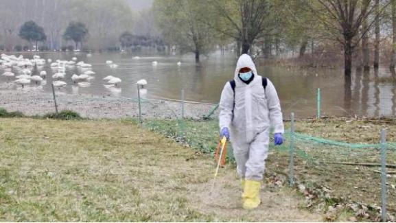 İnsana ilk kez bulaşan kuş gribi virüsü 46 ülkeye yayıldı