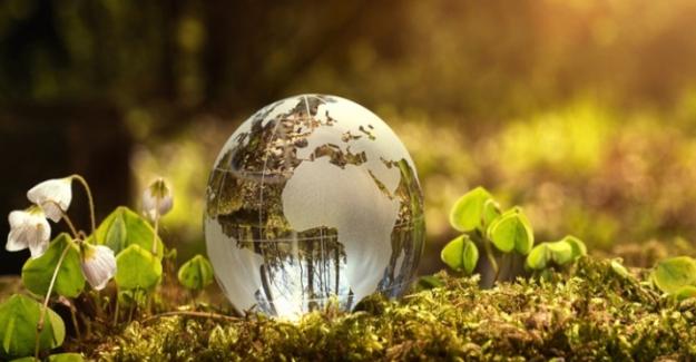 Bugün Dünya Çevre Günü: Bu yılın teması 'Ekosistem Restorasyonu'