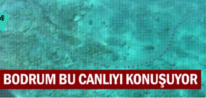 Akdeniz'i istila eden yeni balık türleri
