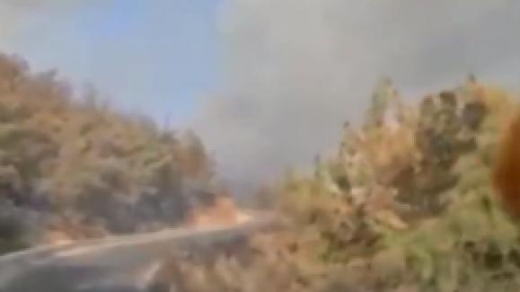 Bodrum'daki yangında sabotaj şüphesi!