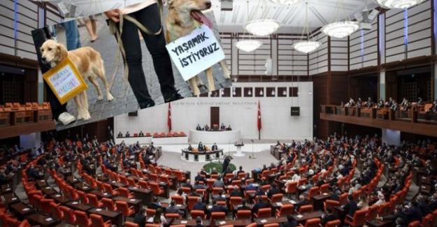 """Hayvanları koruma kanun teklifi kabul edildi: Onlar da """"CAN"""" sayılacak"""