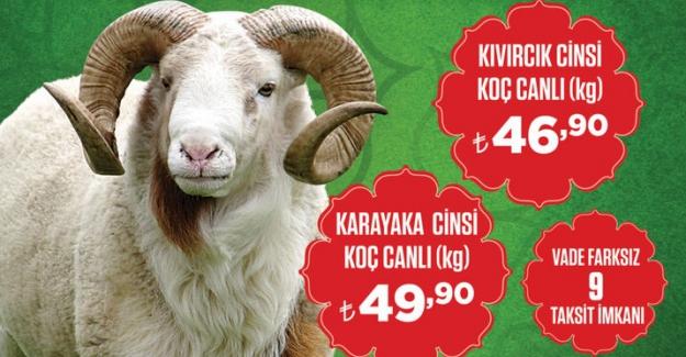 Özdilek Bursa Merkezde kurban satışları başladı!