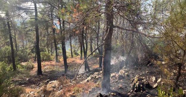 Muğla'da 13 ayrı bölgede çıkan orman yangınları kontrol altına alındı