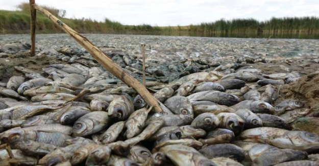 Trakya'da Doğa Katliamı; Binlerce balık telef oldu ve sadece para cezası!