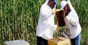 Nilüfer Kent Bostanları'nda bal üretimi