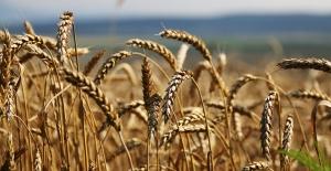 """Rusya Tarım Bakanı Dmitriy Patruşev; """"Türkiye'ye buğday sevkiyatımız yüzde 40 arttı"""""""