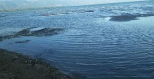 İznik Gölü'nde korkutan manzara