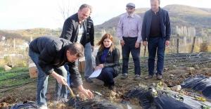 Nilüfer'de meyve yetiştiriciliği gelişİyor