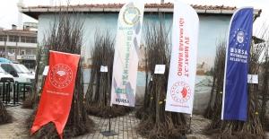 Harmancık tarımda ayva ile markalaşacak