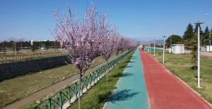 Bursa'da erik ve bademler çiçek açtı
