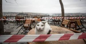 'Koronavirüsten korumak için kedilerinizi evde tutun'