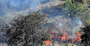 Bodrum'da yangın; 10 Hektarlık Alan Zarar Gördü