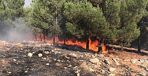 Şanlıurfa'da  yangın: 45 Hektarlık orman arazisi zarar gördü
