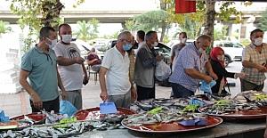 Rize'de Palamut'un fiyatı 7 buçuk liraya düşünce vatandaş kapıştı