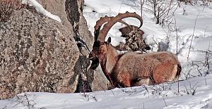 Hayvanları Koruma Günü'nde 230 STK'dan Ortak Çağrı: Avcılık Yasaklansın