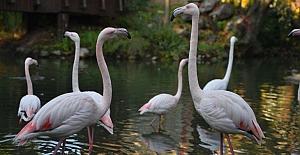 Bursa Hayvanat Bahçesi 22 yaşında