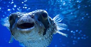 Pakdemirli: Balon balığı avcılığını destekleme kapsamına aldık