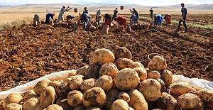 Üretici ekimde zorlanıyor, patateste de ithalat kapıda