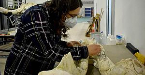 Kayseri'deki kazı çalışmalarında dünyada eşi olmayan bir fil kafatası fosili bulundu