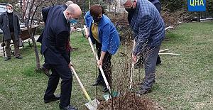 Ukrayna ve Kırım'ı sembolize eden ağaçlar Türkiye'de kök salacak