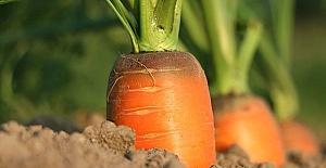 Türkiye'de tarımın geleceği yerli üretimde