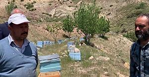 Kuraklık Arıcıları da vurdu; Polen miktarındaki düşüklük arıların gelişmesini engelledi