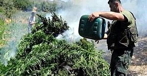 """Jandarma Genel Komutanlığı, PKK'ya bir ağır darbe daha vurdu: """"PKK'nın uyuşturucu tarlaları yok edildi!.."""""""
