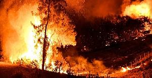 Osmaniye'deki orman yangınıyla ilgili 5 şüpheli gözaltına alındı