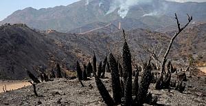 İspanya'da orman yangınları: 2 bin kişi evini terk etmek zorunda kaldı
