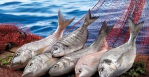 Amerika'ya balık ihracatımız 9 yılda 115 kat arttı